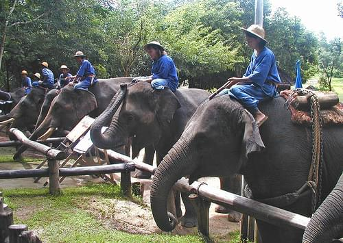 Elephant Conservation Center, Lampang
