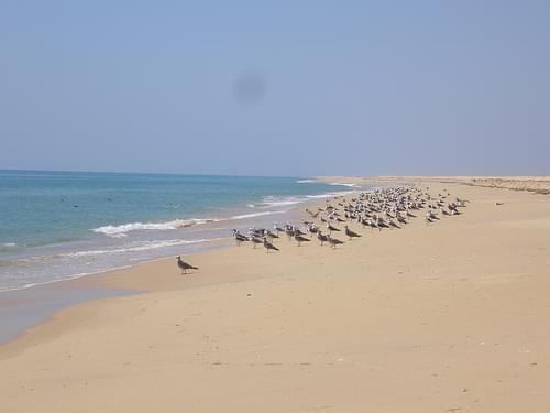 Ilha deserta 2: kaioak