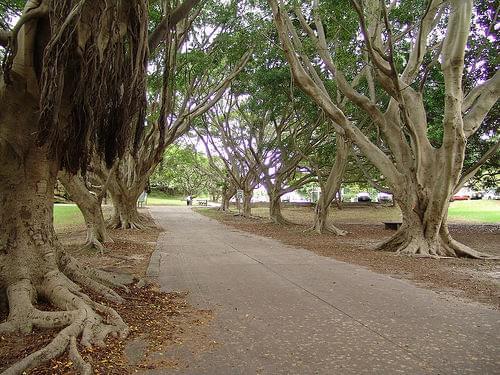 200502 tree arch