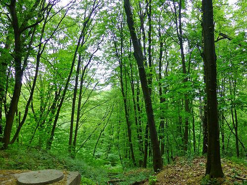 Podilski Tovtry National Park