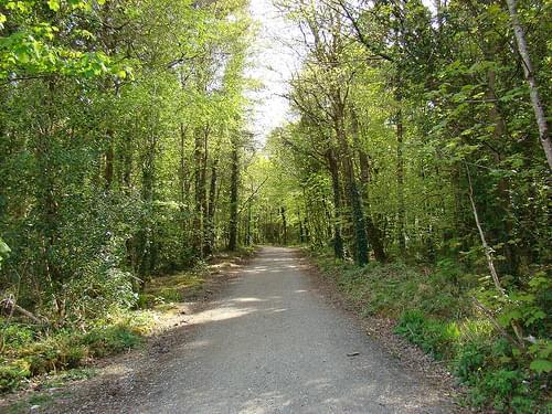 Belleek Forest Park, Ballina