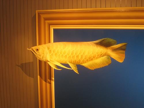 Tropical fish at Takao Trick Art Museum: 1