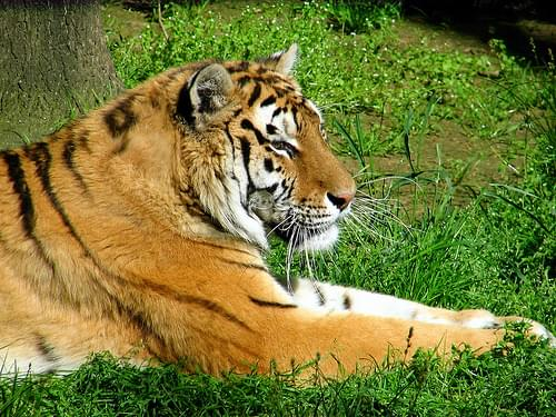 Nyiregyhaza Zoo