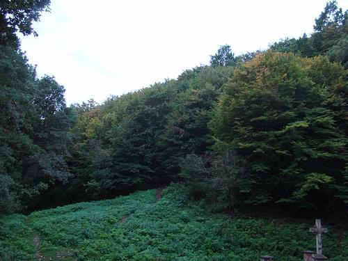 Padurea Domneasca Nature Reserve