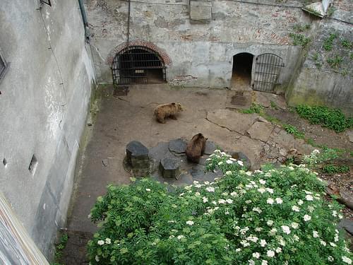 Český Krumlov bears