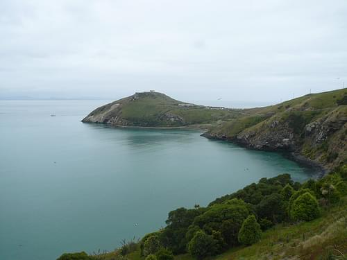 Dunedin - Taiaroa Head 17