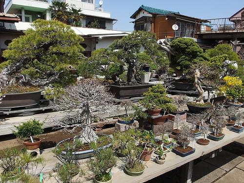 Bonsai nursery @ Omiya Bonsai Village