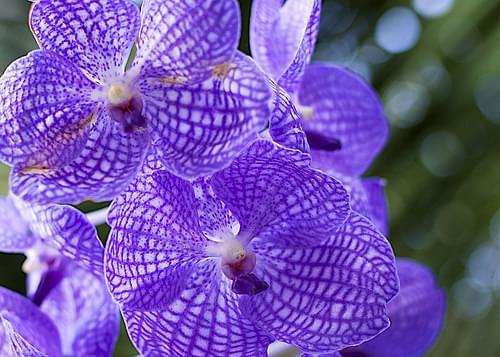Orchids at U.S. Botanical Garden