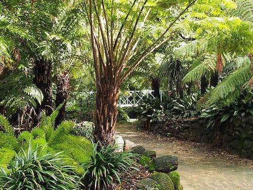 Bendigo Botanic Garden 007