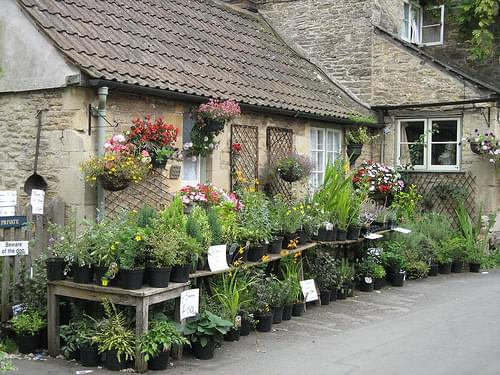 ~ lacock village ~ plants for sale