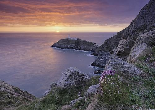'Sea-Thrift Sunset' - South Stack, Anglesey