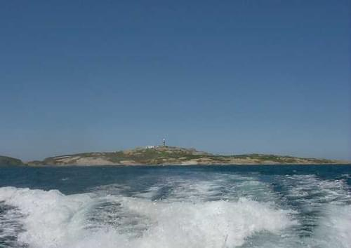 Farewell to Montague Island