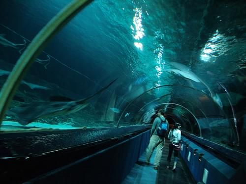 200510 underwater tunnel