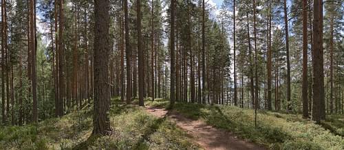 Leivonmäki National Park I