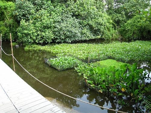 Singapore Sungei Buloh Wetland Reserve
