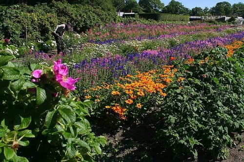 Fleurs dans Rosendals Tradgard.