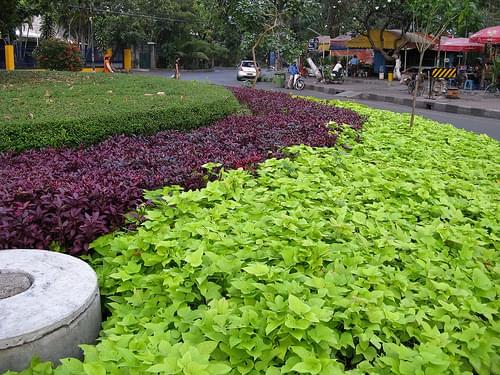 Green Junction in Darmo, Surabaya