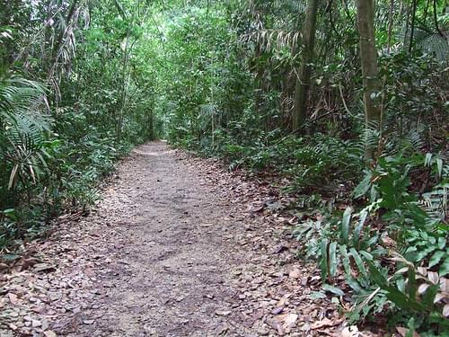 MacRitchie Nature Trail, Singapore