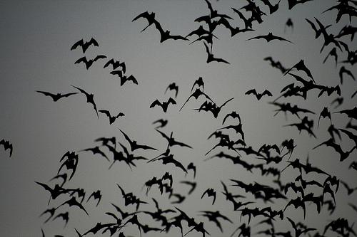 Millions of bats, Khao Yai