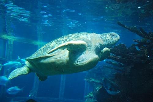aquarium_turtle4