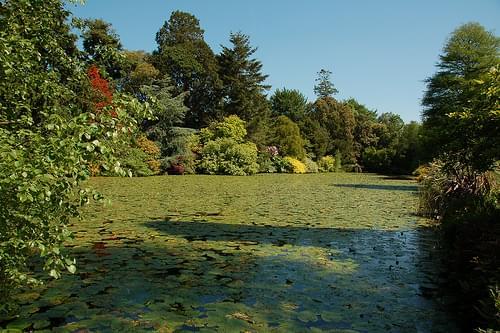 Altamont Garden 2