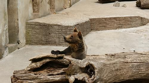 Bojnice Zoo