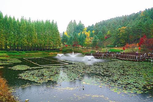 Fish Pond at Cheongnamdae