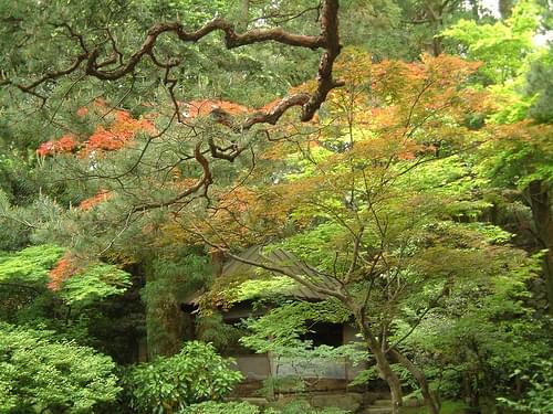 Samurai garden