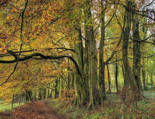 The Wood at Cheesfoot Head , Winchester