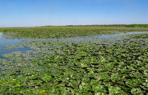 Chokrak Lake