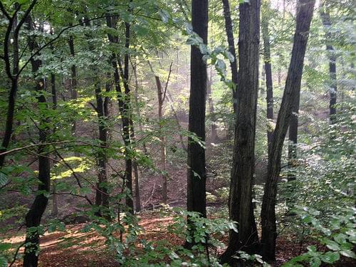 Bratislava Forest Park