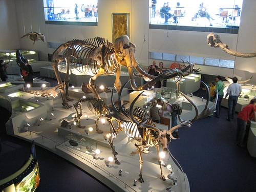 Naturalis Biodiversity Center, Leiden