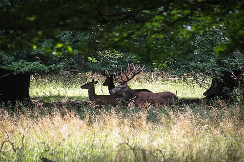 Jægersborg Deer Park