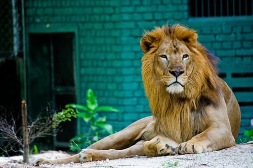 A Visit to Zoo Negara II