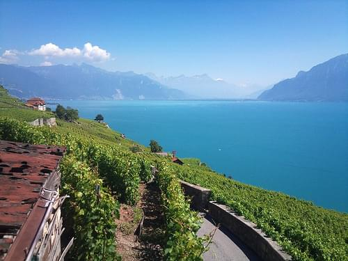 Le Lavaux seen from Chexbres, Switzerland