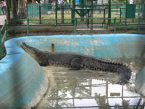 Crocodile Farm Davao_Lumix (20)