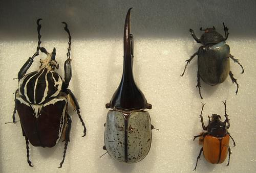 Entomological Museum 005