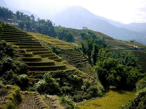 Terraced rice fields of Sapa.