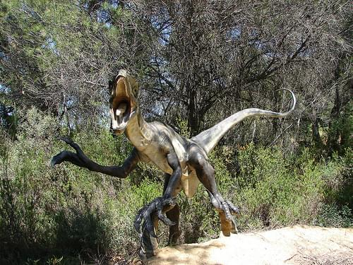 Raptor in Dinopark