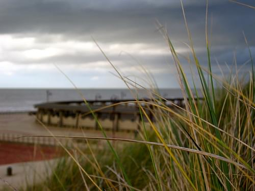North Sea Dune Grass