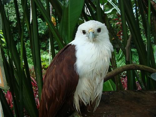 Philippine Eagle Center Davao_Cybershot (34)