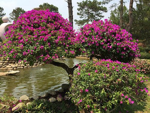Lam Dong, Vietnam