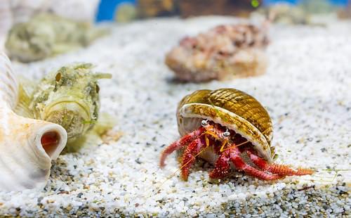 Aquaworld Aquarium, Crete