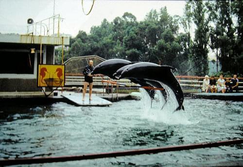 Batumi dolphinarium 80192