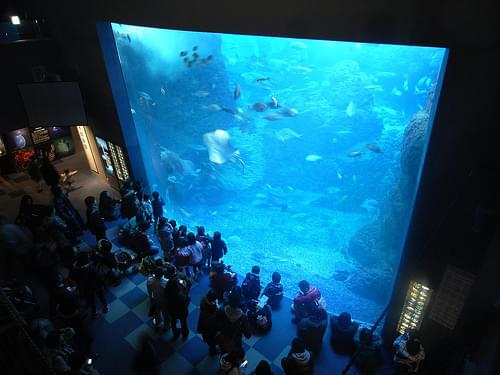 grand aquarium at enosui