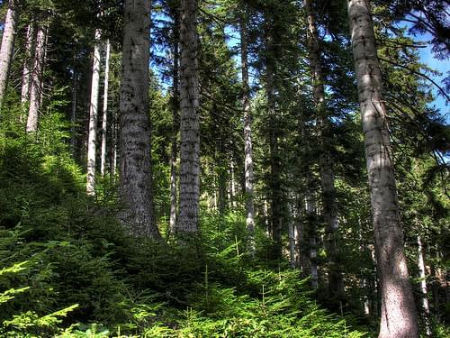 Artvin forest - HDR