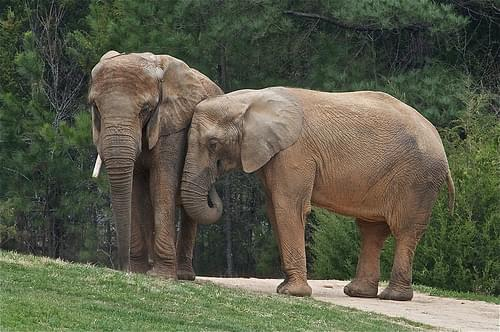 Wildlife Friends Foundation - Elephant Rescue Center