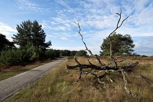 The Hoge Veluwe National Park