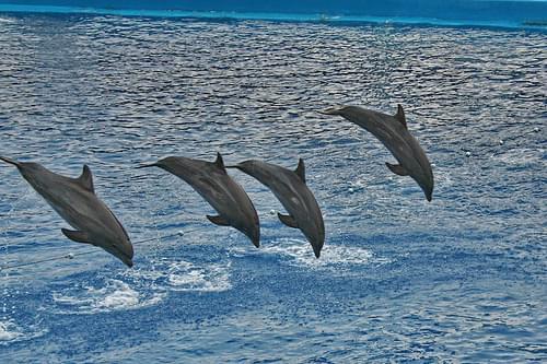 Dolphins / Делфини