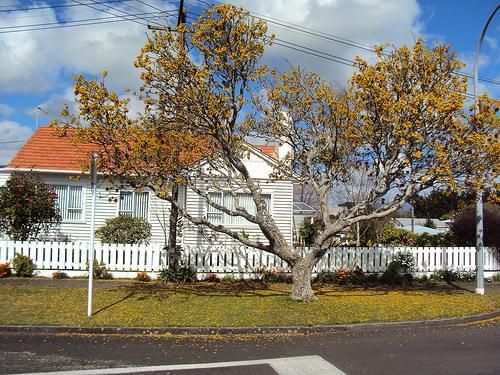 Residential street in New Plymouth in Autumn